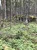 Newfoundland Caribou Hunt, Moose, Bear Hunting 79