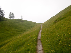 The path ahead (Freddy Berlin) Tags: nature outdoor mountains hiking green bavaria germany karwendel krün mittenwald summer travel olympus pen m43 mft micro four thirds camera photography scenic idyllic rocky rough terrain national park light cloudy day clouds overcast soft road landscape grass bright rainy yellow flowers symbol composition simple breathing meditation peace happy mission valley white alps alpen hills buckelwiesen flower blossoms