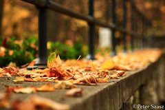 Fallen leaves (Peter Szasz) Tags: leaves autumn fall colourful calm peaceful stone fence edge rim brown yellow bright hungary magyarország lillafüred nature november outside park outdoors canon clear tranquil peace bokeh travel tree bars forest fresh castle concrete wall