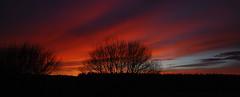 Red sky at night ... (M McBey) Tags: sky red sunset tree horizon lore
