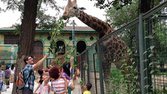 """china-zoo-2014-photo-jul-08-10-27-34-pm_14461207767_o_41390621065_o • <a style=""""font-size:0.8em;"""" href=""""http://www.flickr.com/photos/109120354@N07/46177700551/"""" target=""""_blank"""">View on Flickr</a>"""