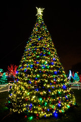 BIG Christmas Tree (Eric Tischler) Tags: strongsville christmas lights tree night