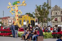 MX MR JARDÍN CULTURAL (Secretaría de Cultura CDMX) Tags: jardin cultural nochebuena zocalo ciudaddemexico méxico ciudaddeméxico