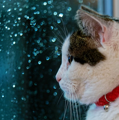 Basil. (S.K.1963) Tags: cat rain droplets window red olympus omd em1 mike 40150mm 28 pro