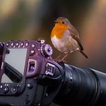 Robin- Camera-Action. Take one. thumbnail