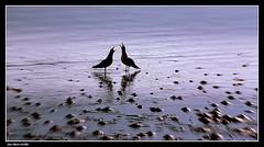 Scéne de Ménage.......? (faurejm29) Tags: faurejm29 canon sea seascape plage beach mouette nature