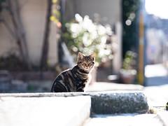Wow (Yakinik) Tags: gf 110mm f20 r lm wr japan 日本 tokyo 東京 yakinik 富士フイルム fujifilm gfx 50s 猫 ねこ ネコ ネコ cat