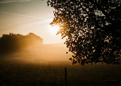 remembering a warmer time (robert.lindholm87) Tags: sony rx sonyrx100 rx100m3 compact nature contrejour sweden summer tree fence field lightroom sun warm wideangel zoom lens camera