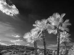 019-2019-365-(1115) View from the terrace (Explored) (graber.shirley) Tags: almeria infrared spain2019
