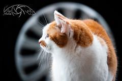 The rim (Lux Animae) Tags: inexplore cat rim