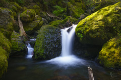 Light and Shadow in the Columbia River Gorge (RobertCross1 (off and on)) Tags: a7rii alpha cascaderange cascades columbiarivergorge emount fe1635mmf4zaoss gortoncreek hoodriver ilce7rm2 longexposure nationalscenicarea or oregon pacificnorthwest sony wyeth cascade creek fullframe landscape log mirrorless moss nature rocks stream water waterfall