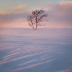 DSCF6832-2.jpg (mblonde12) Tags: britannia winter