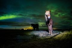 Horses under northern lights (modesrodriguez) Tags: horses animals aurora borealis northernlights landscape nature iceland nightscape nightphotography fuji