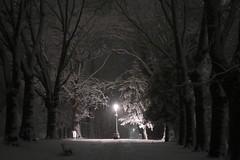 Narnia? (Benn Gunn Baker) Tags: canon powershot g9 x mark ii benn gunn baker st george church road rd snow winter ice white freeze park