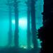 Flinders Pier Underwater-4