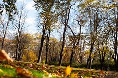 Graz November 2018_Karin Wernig_0057 (Foto-Karin.at) Tags: graz stadtpark austria herbst autumn technic natur dach altstadt überdendächern ginko wind