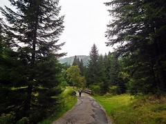 im Riesengebirge Tschechien - in the Giant Mountains - Czech Republic (fleckchen) Tags: riesengebirge giantmountains tschechien gebirge mittelgebirge bäume trees berge tal täler mountains valley wiesen wandern natur park parks nationalpark nationalparks urlaub landschaft landscape landschaften
