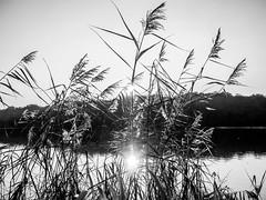 Jeux d'ombres et de lumière (Daniel_Hache) Tags: shadow sunset blanc coucherdesoleil soleil lumiere etangdelatour ombre noir light vieilleégliseenyvelines yvelines france fr flickrchallengegroup