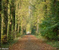 Herfst 2018-1 (pa0mjm) Tags: nikon d7000 autumn trees overijssel landscape tree path wandering vanishingpoint