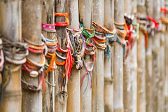 Prayer Bracelets on Bamboo Posts Surrounding Mass Grave in The Killing Fields, Phnom Penh