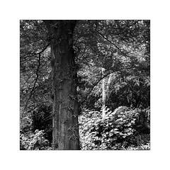 Oh ! Un papillon... (Scubaba) Tags: europe france pasdecalais noirblanc noiretblanc bw blackwhite arbres trees carré square monochrome