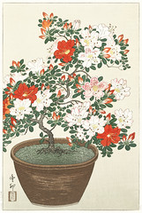Blooming azalea in brown pot (1920 - 1930) by Ohara Koson (1877-1945). Original from The Rijksmuseum. Digitally enhanced by rawpixel. (Free Public Domain Illustrations by rawpixel) Tags: pdproject21batch2x otherkeywords tagcc0 antique art asian azalea blooming brownpot drawing flower illustration japan japanese koson museum name ohara oharakoson old paint rijksmuseum vintage