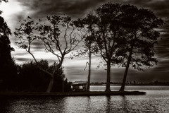 Containment (Alfred Grupstra) Tags: nature silhouette sunset water tree river sky outdoors blackandwhite reflection cloudsky dusk lake landscape dark backlit scenics cloudscape night sunlight