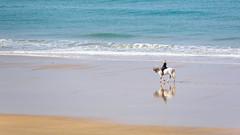 Die Schimmelreiterin (jameshjschwarz) Tags: 2840150mm andalusien bach horse mft olympusem1 pferd playa reiter schimmel spanien strand