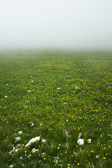 (Matteo-Palmieri) Tags: fog flower flowers mountain landscape