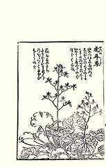 Creeping saxifrage (Japanese Flower and Bird Art) Tags: flower creeping saxifraga stolonifera saxifragaceae kobayashi ukiyo picture book japan japanese art readercollection