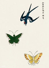Japanese vintage original woodblock print of swallow and butterflies from Yatsuo no tsubaki (1860-1869) by Taguchi Tomoki. Digitally enhanced from our own antique woodblock print. (Free Public Domain Illustrations by rawpixel) Tags: swallow ancient antique art artistic asian bijutsu bijutsusekai bird butterflies butterfly chinese concept cultural culture decoration design drawing eastern flying green illustration japan japanese kachoga name nature old oriental ornament pattern pdproject print publicdomain retro seitei sekai taguchitomoki vintage watanabe watanabeseitei wild woodblock yatsuonotsubaki yellow
