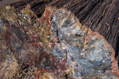 Long Logs Trail, Petrified Forest National Park (Brandon Kopp) Tags: 2470mm arizona d750 nationalpark nikon petrifiedforest travel vacation holbrook unitedstates us petrifiedforestnationalpark petrifiedwood longlogstrail colorful
