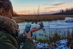 behind the scenes wildlife photography (beyondhue) Tags: chickadee hand bird birdwatching ottawa beaver trail stony swamp greenbelt beyondhue winter frozen pond feed girl cold weather
