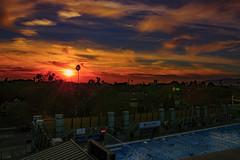 11 (morgan@morgangenser.com) Tags: sunset pretty beautiful red orange colorful evening dusk clouds blue palmtree santamonicacollege smc silhouette sun yellow cool