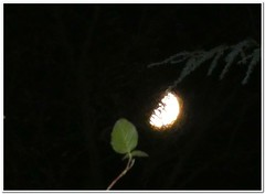 Through the Twigs (MaxUndFriedel) Tags: nature sky moon twigs night autumn fall november