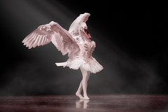 Swan Lake? (Repp1) Tags: bc bellperformingartscentre canada essenceofdance surey swan cigne swanlake lacdescignes ballet dance danse dancer danseuse