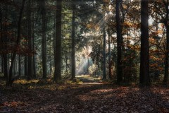 Evergreen (Parchman Kid (Jerry)) Tags: evergreen tree trees forest woods path sun rays parchmankid sony a6500 autumn landscape