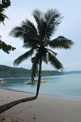 Yeah,... (O Lobão) Tags: beach sand ocean sea water palmtree tree paradise color 750d sooc travel philippines palawan portbarton green nature miss