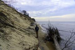 Reclaiming the Dunes (Tom Gill.) Tags: beach dune sanddune lakemichigan michigan lake vanburen statepark shore
