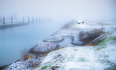 Into the distance (Ingeborg Ruyken) Tags: sneeuw morning maximakanaal empel rodegeuzen natuurfotografie mist instagram koeien fog 500pxs ochtend flickr snow
