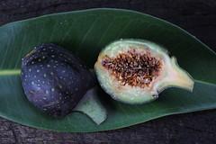 Ficus watkinsiana Moraceae Watkins Fig Nipple Fig 0118 10 Ravenshoe (John Elliott Townsville) Tags: arfp qrfp tropicalarf uplandarf arffs atherton tabelandficusficus watkinsianamoraceaewatkins fignipple fig purplearffs