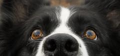 D'ose (JJFET) Tags: littledoglaughedstories