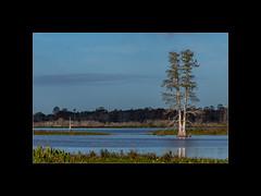 D8506247 (Martin van der sanden) Tags: circle b bar lakeland fl nikon d850 200500mm