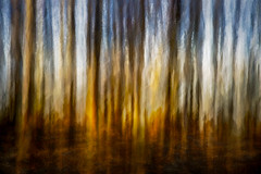 Rothamsted Woods (RCARCARCA) Tags: harpenden 24105l eosr rothamsted trees woods icm photoshop topaz photoartistry