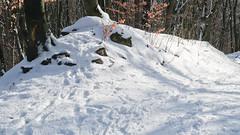 019Jan 29: Winter Forest 1 (Johan Pipet 2M+ views) Tags: flickr les hora forest greenwood winter zima sneh snow sunny nature príroda dubravka devinska kobyla bratislava slovakia slovensko eu europe palo bartos bartoš canon g7x
