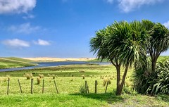 Dunes (simonmgc) Tags: cabbagetree capereinga dunes giantsanddunes newzealand northland nz sh1