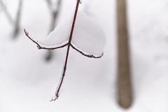B4 T05_0554_escarpement arbres_DSF1798 (J-P Rioux) Tags: jprioux fujifilm fuji xt3 escarpement arbre forêt glace