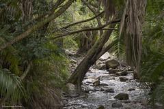 Kirstenbosch Gardens (Hernan Linetzky Mc-Manus) Tags: capetown southafrica wild linetzky ciudaddelcabo kirstenbosch