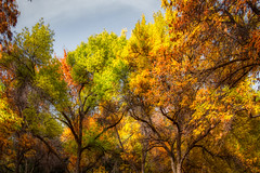 Pocatello Fall Sky (Photography by Stefano Carini) Tags: pocatelloid idaho fall sky colors fallcolors colorfulltrees trees nature colorednature outdoors