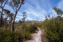 Exploring The Grampians (Jutta Sund) Tags: path sky clouds scenery landscape grampians australia mountains wildflowers trees sunny trekking hiking bushwalk